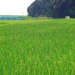 となりの芝生が青く見えるのは、迷っている証拠と思うべし。