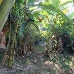 タイ ペッチャブーンで肥沃な土地を体感!