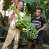 タイの田舎町に移住して5ヶ月!農的生活をしてきて、農業を営んでいる方の大変さがわかった5ヶ月でもあった!